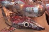 РЫБНЫЙ РЫНОК В КАТАНИИ НА СИЦИЛИИ  CATANIA FISH MARKET inSICILY
