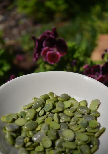 Зеленые бобы и путешествие по Кипру